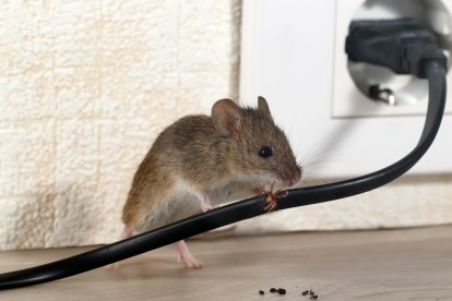 Pest Control in Earlsfield, SW18. Call Now! 020 8166 9746