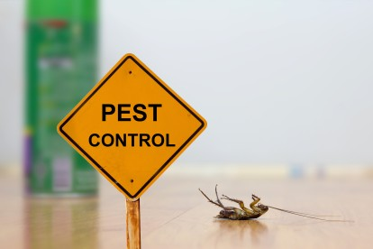 Pest Contol in Earlsfield, SW18. Call Now 020 8166 9746