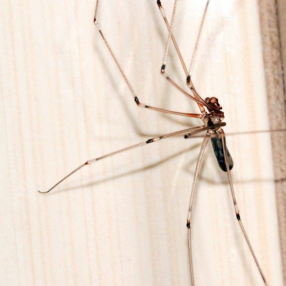 Spiders, Pest Control in Earlsfield, SW18. Call Now! 020 8166 9746